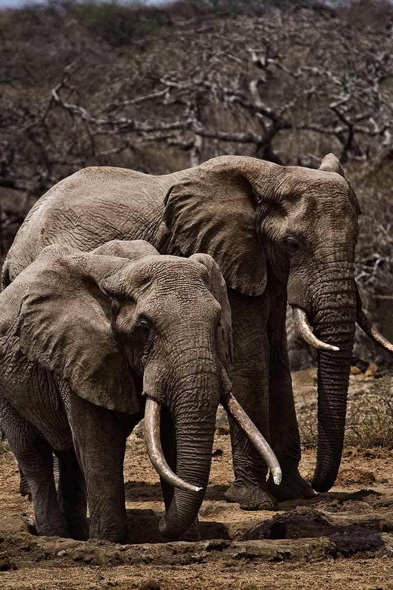 1masai_mara_elephants.jpg