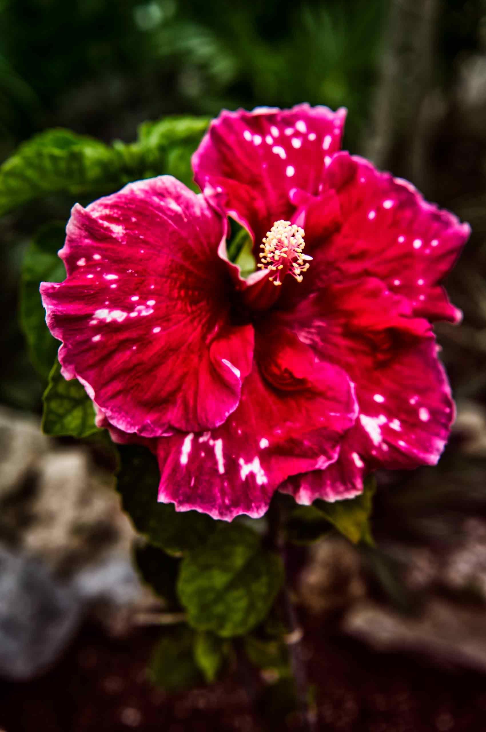 Flower-Red-Pistil-Mexico-by-HenrikOlundPhotography.jpg