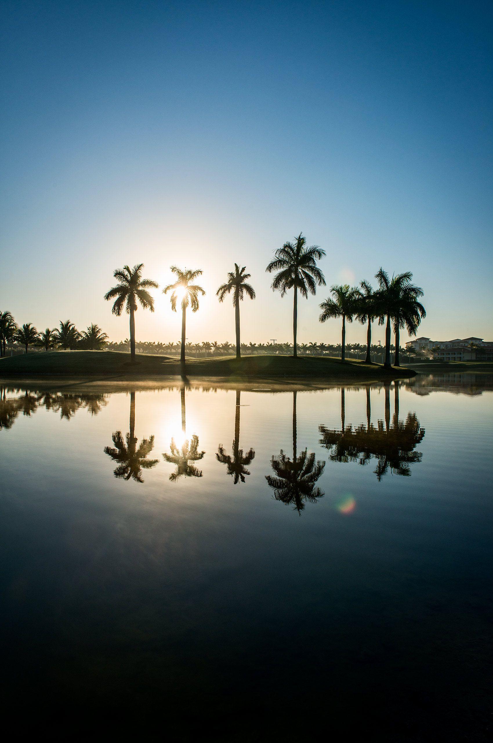 Palmtrees-reflection-in-water-HenrikOlundPhotography..jpg