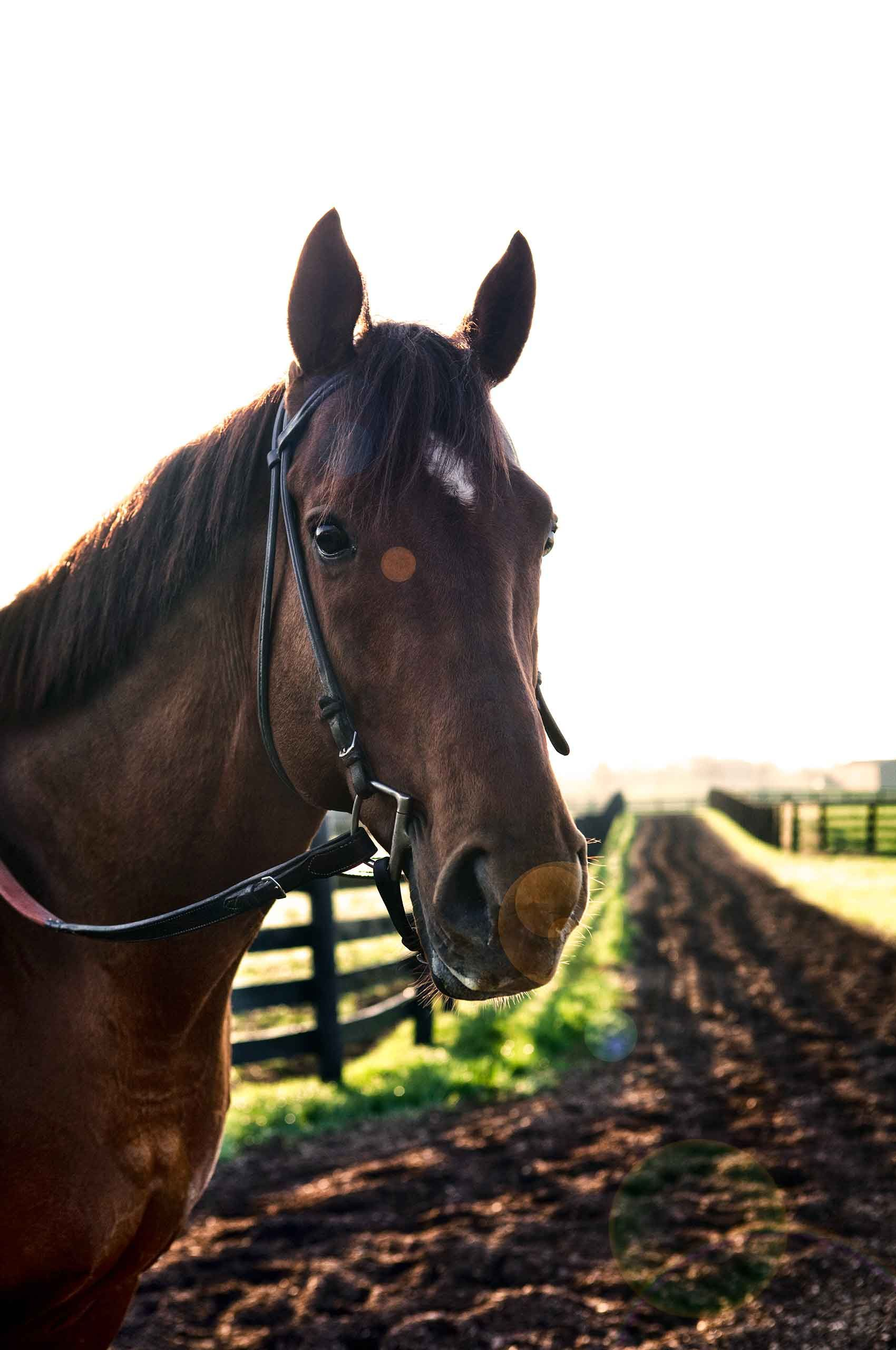 Horse, Kentucky     $400