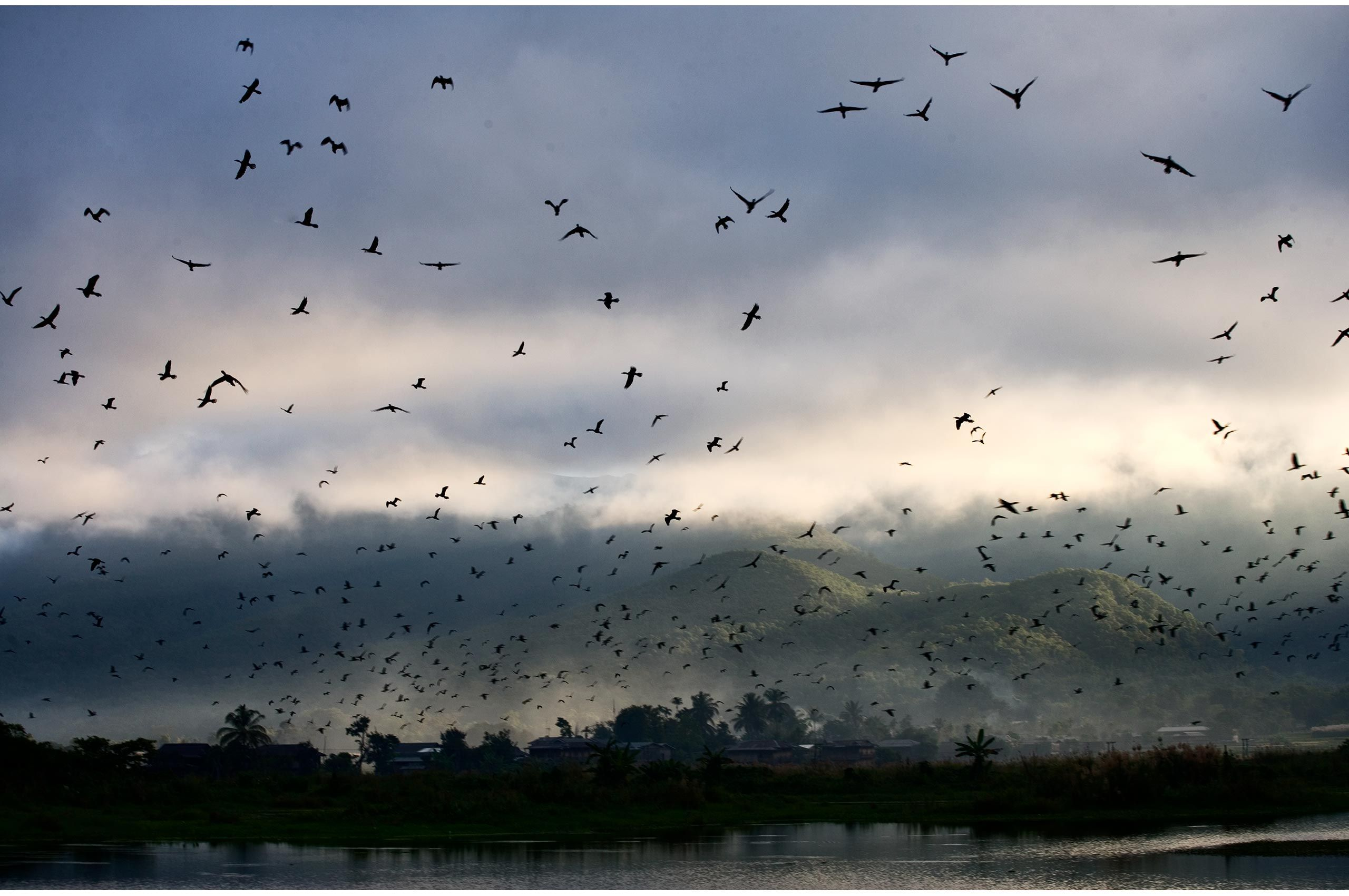 myanmar-morning-with-birds-HenrikOlundPhotography.jpg