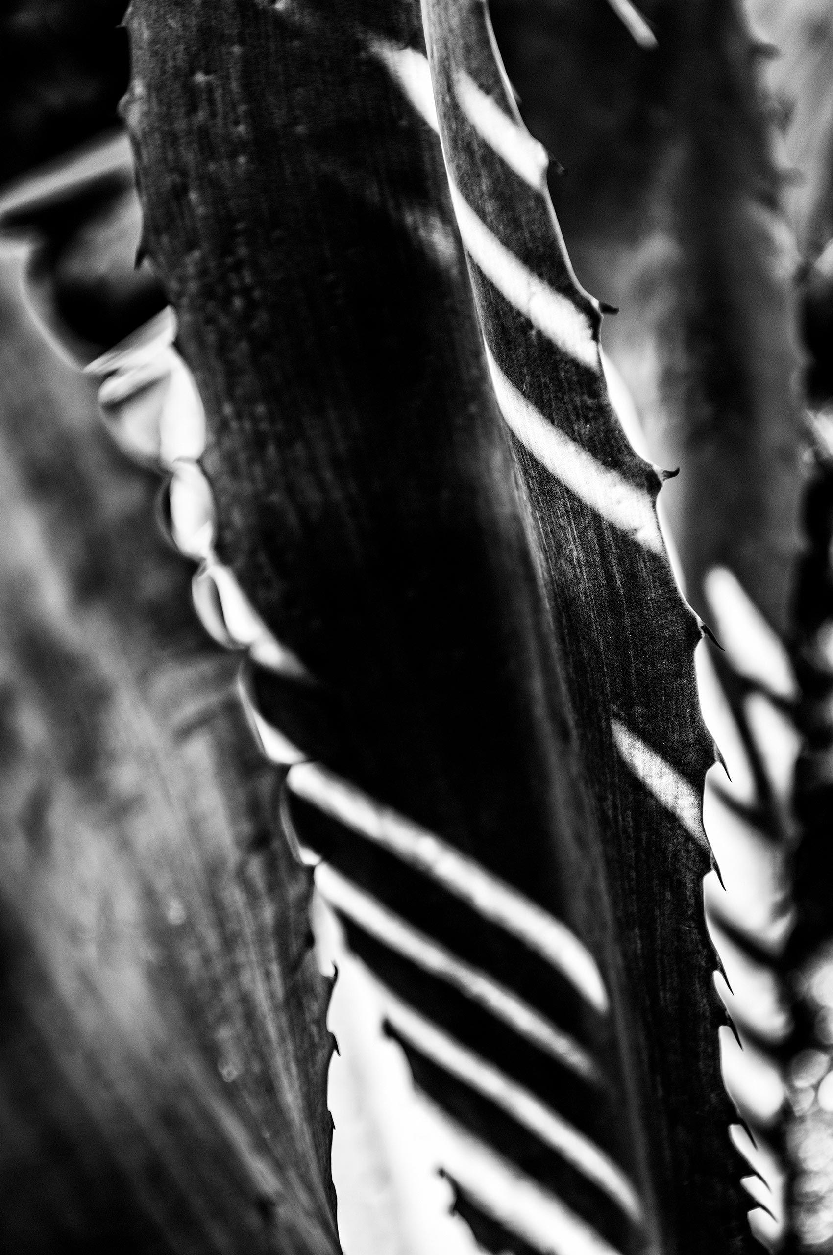 cactus-shadows-HenrikOlundPhotography.jpg