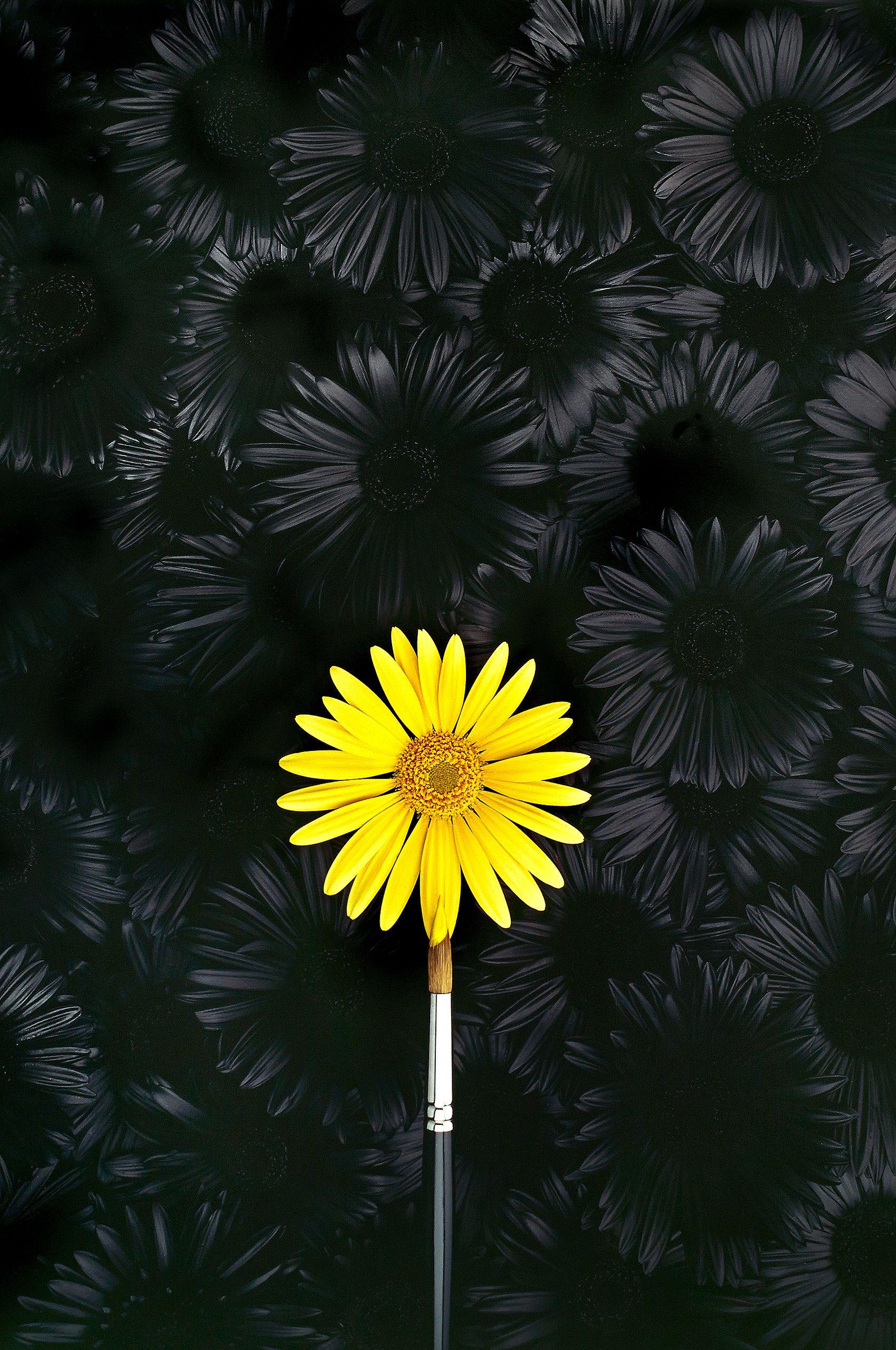Daisy-Poster.jpg
