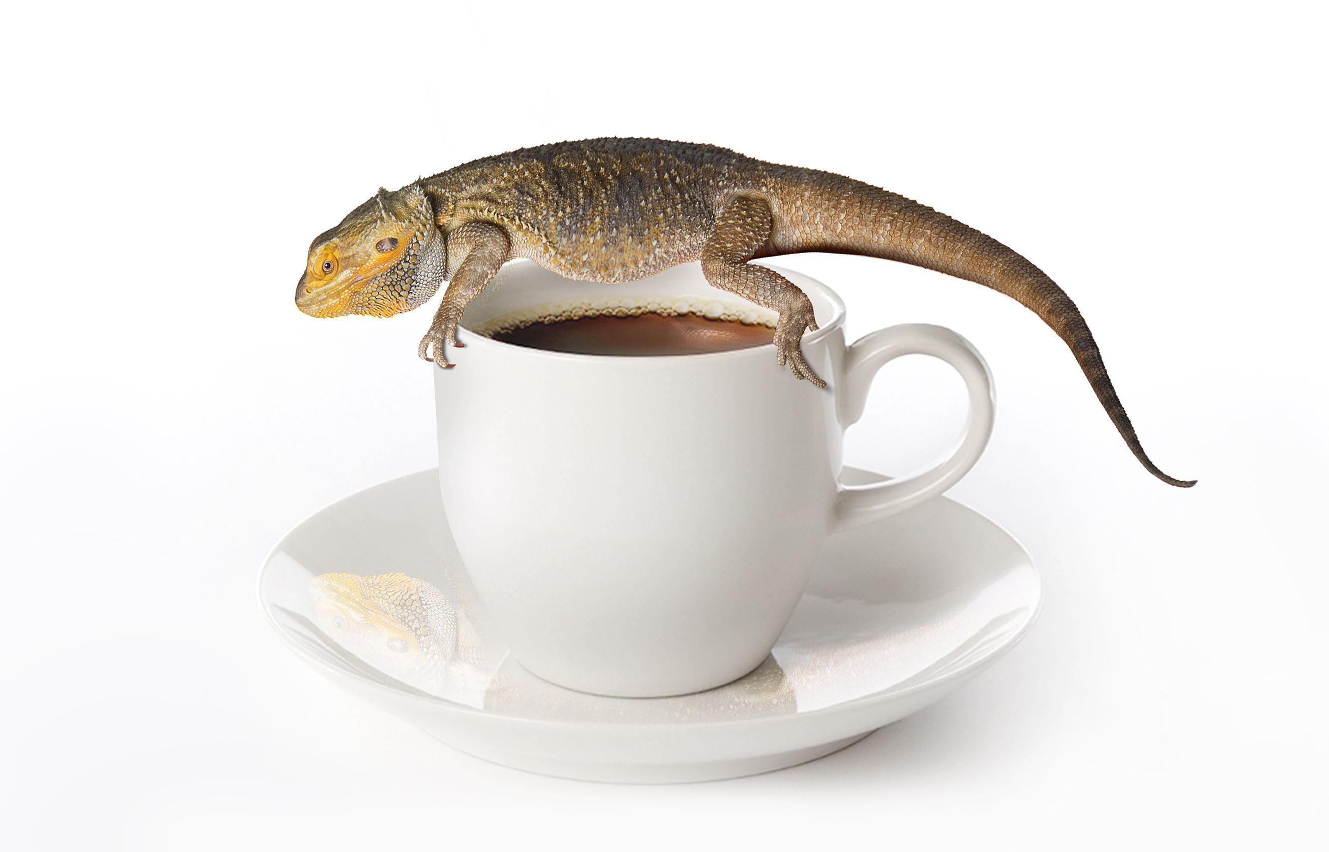 Dragon-in-Coffee.jpg