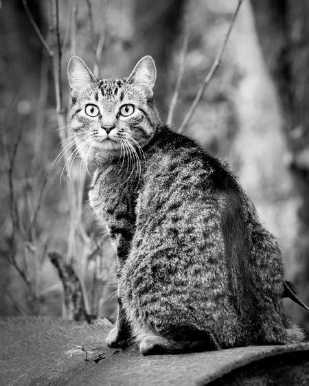 1Michelle_s_cat_1.jpg