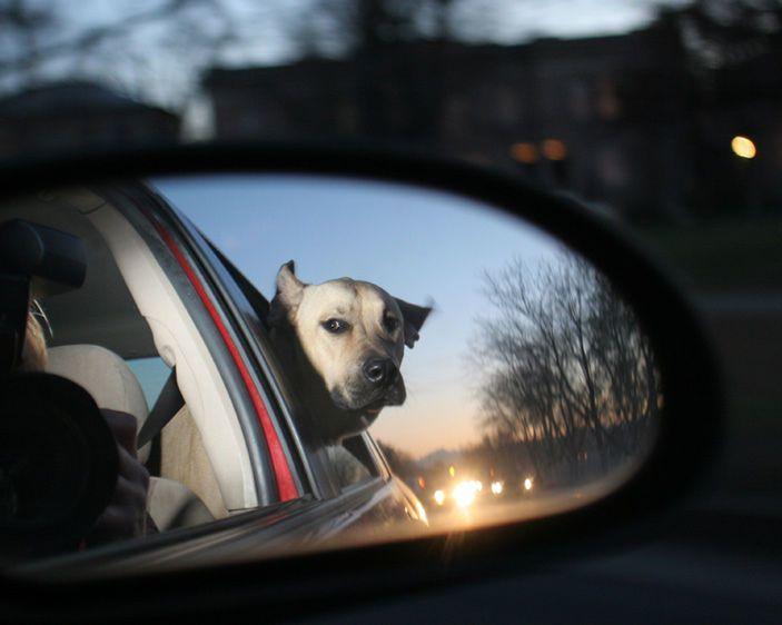 11-Dog_in_rv_mirror.jpg