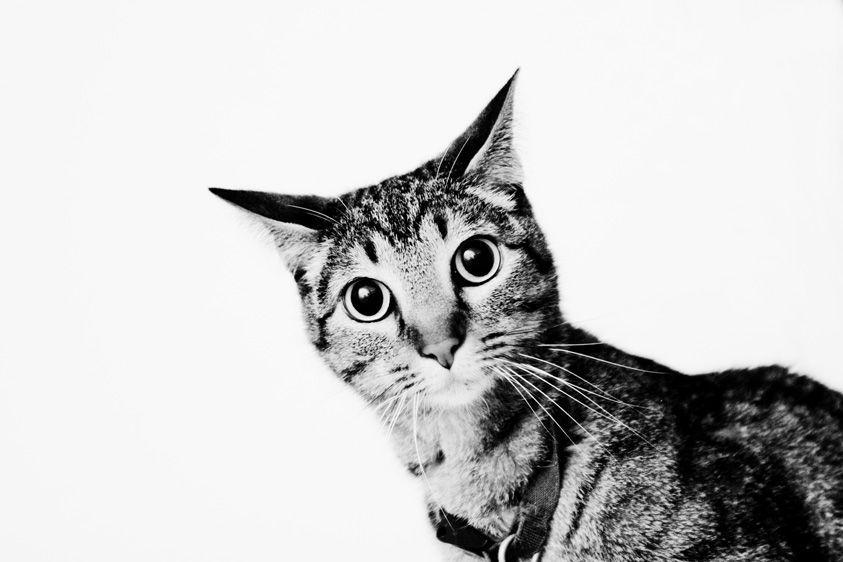 1stripped_cat_2.jpg