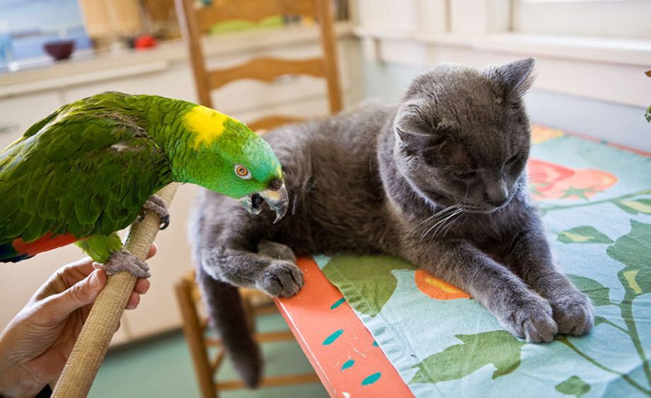 1Parrot_and_cat_1.jpg