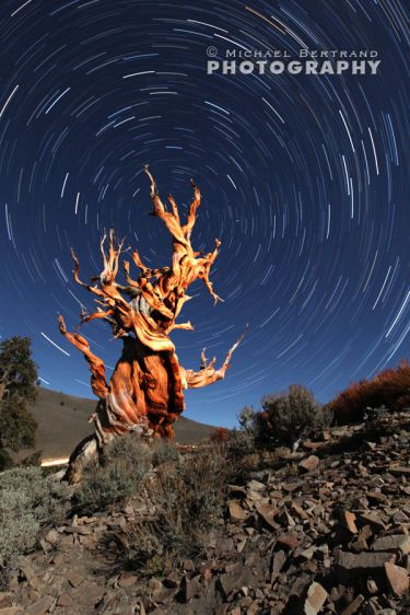 Methuselah Tree Startrails