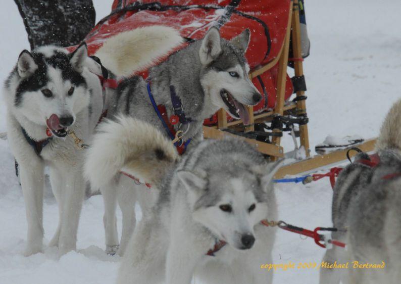 Blake Matray's siberian husky team arriving at Rainy Pass checkpoint