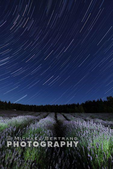 Lavender Star Trails 2015