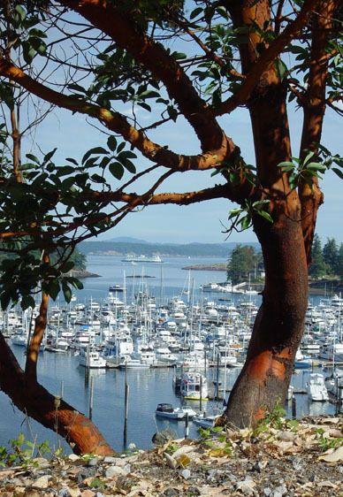 Madrona View @ Roche Harbor
