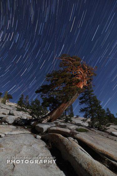 Tree Olmsted Pt Startrails