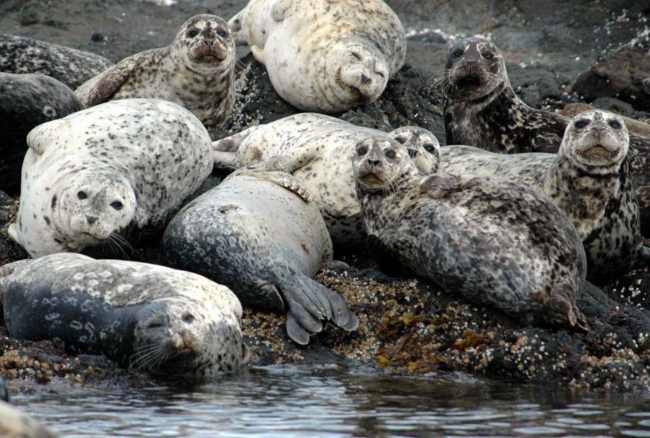 Seal Vision