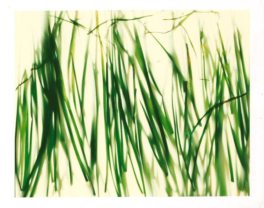 1chives