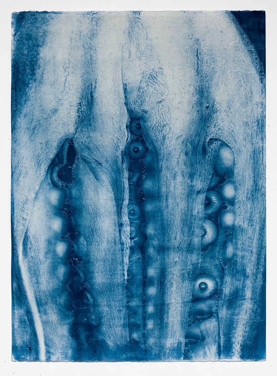 1buckley_cyanotypes_sept_5