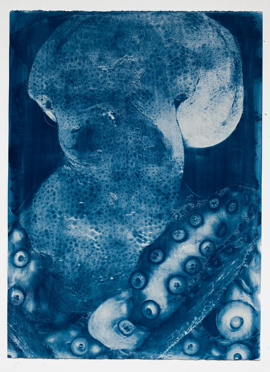 1buckley_cyanotypes_sept_3