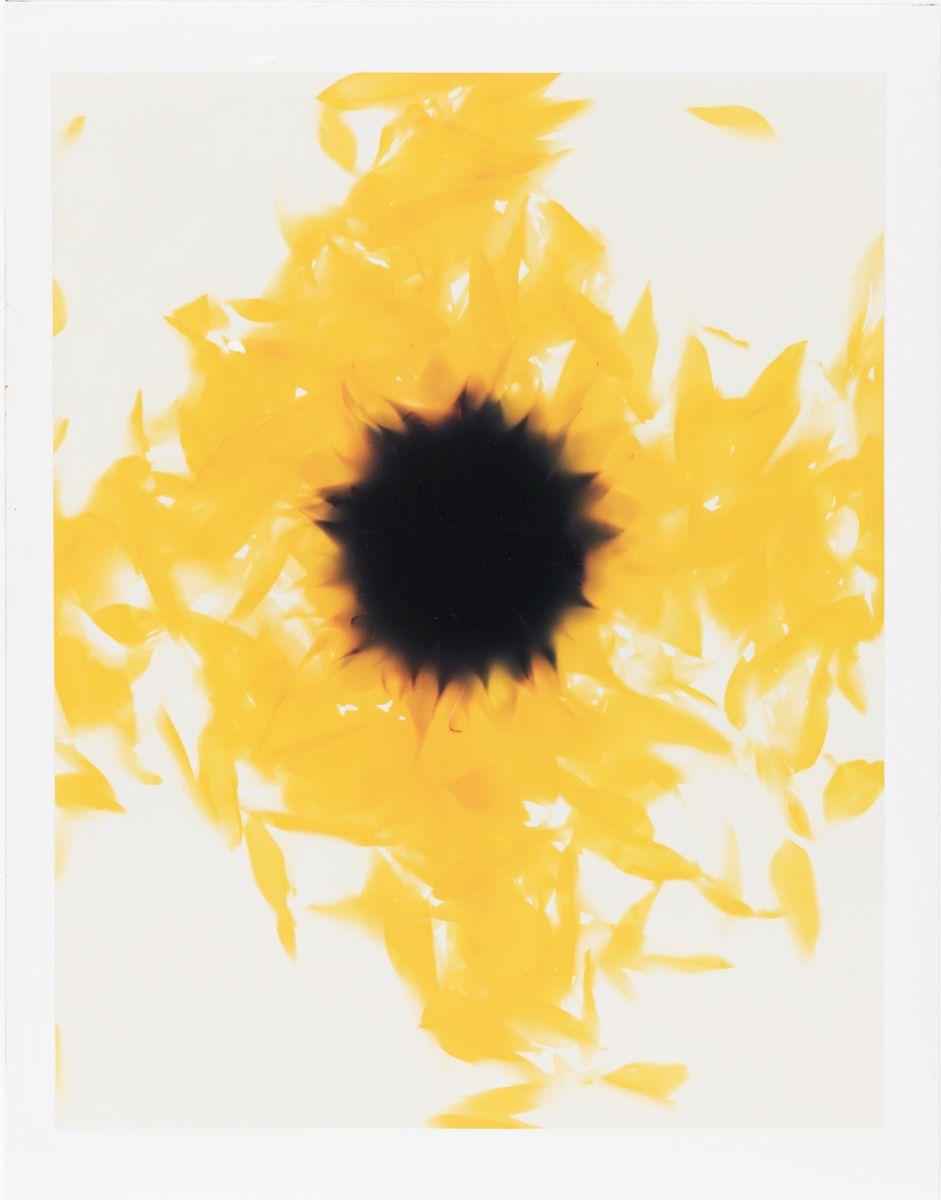 1sunflower_l