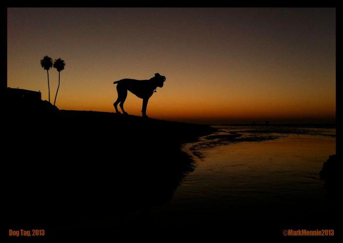#dogbeach