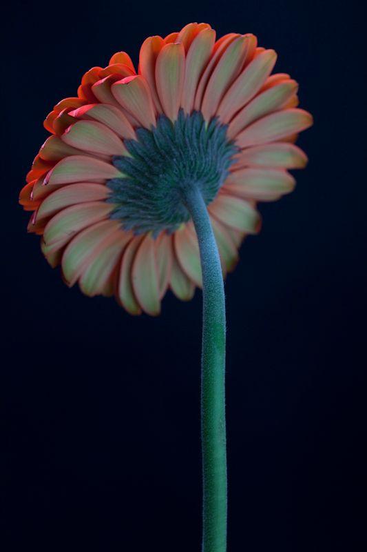 1r2012_flowers_0175