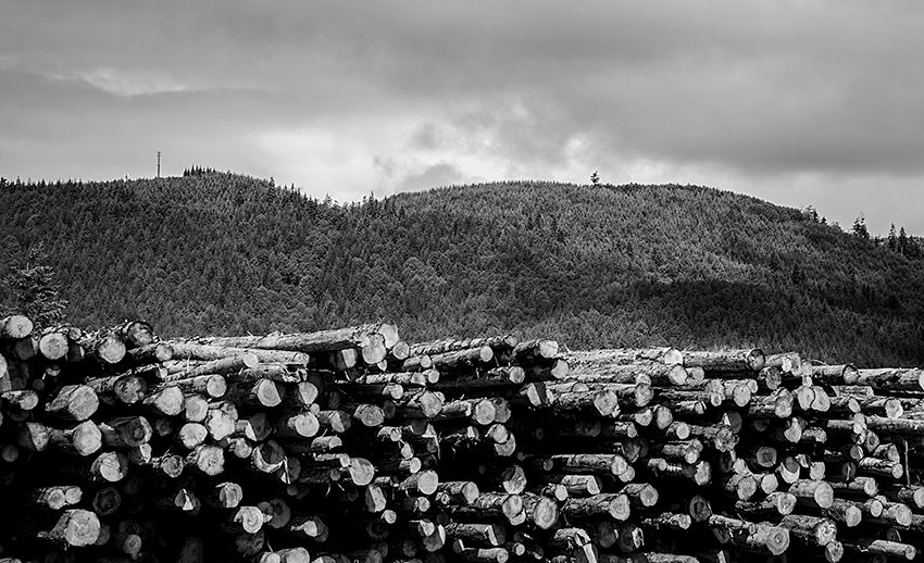 Stacked Logs_Raymond_WA_BW.jpg