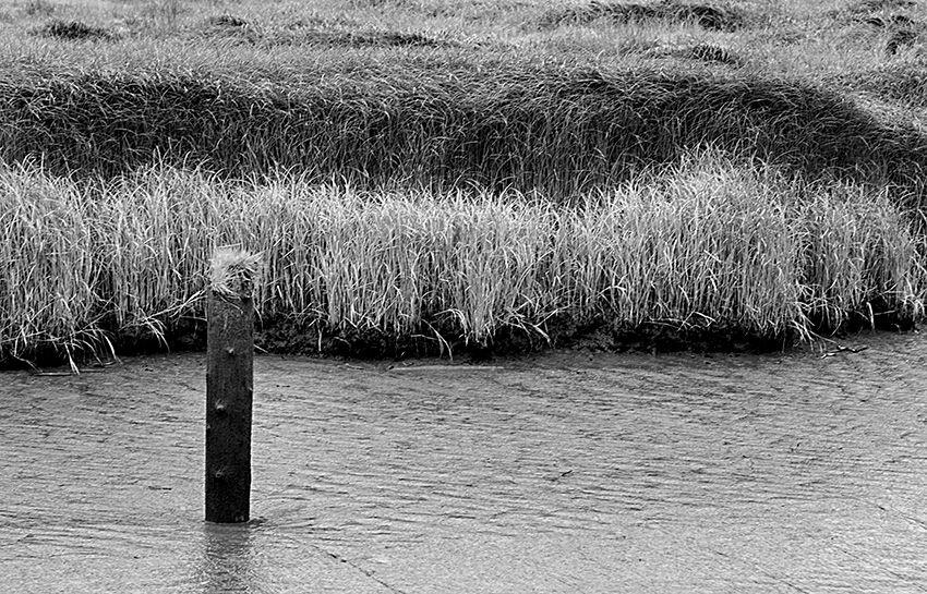 Miksang Grass.jpg