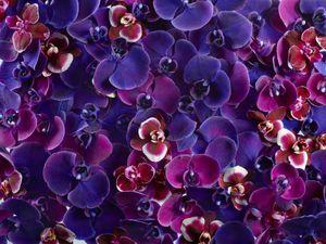 OrchidBlossom_Overhead_NoBottle_HR_r2.jpg