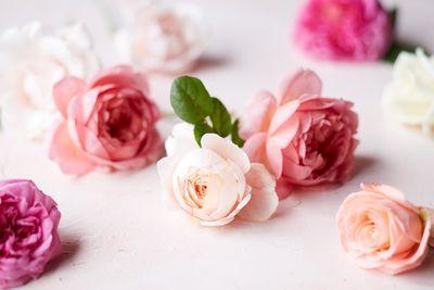 Roses-0228.jpg