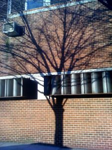 1tree_on_wall_orig