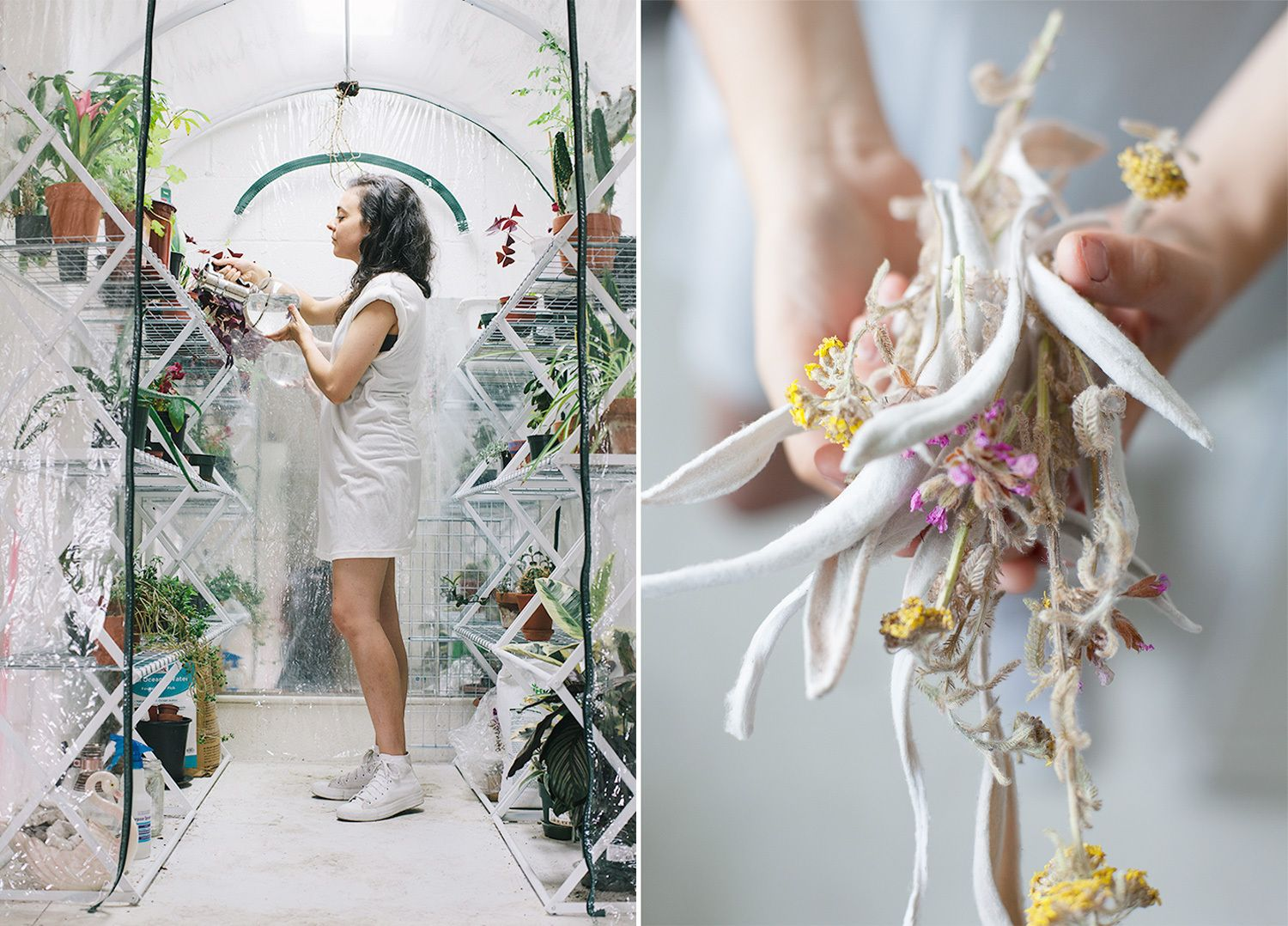 Gorgeous greenhouse images