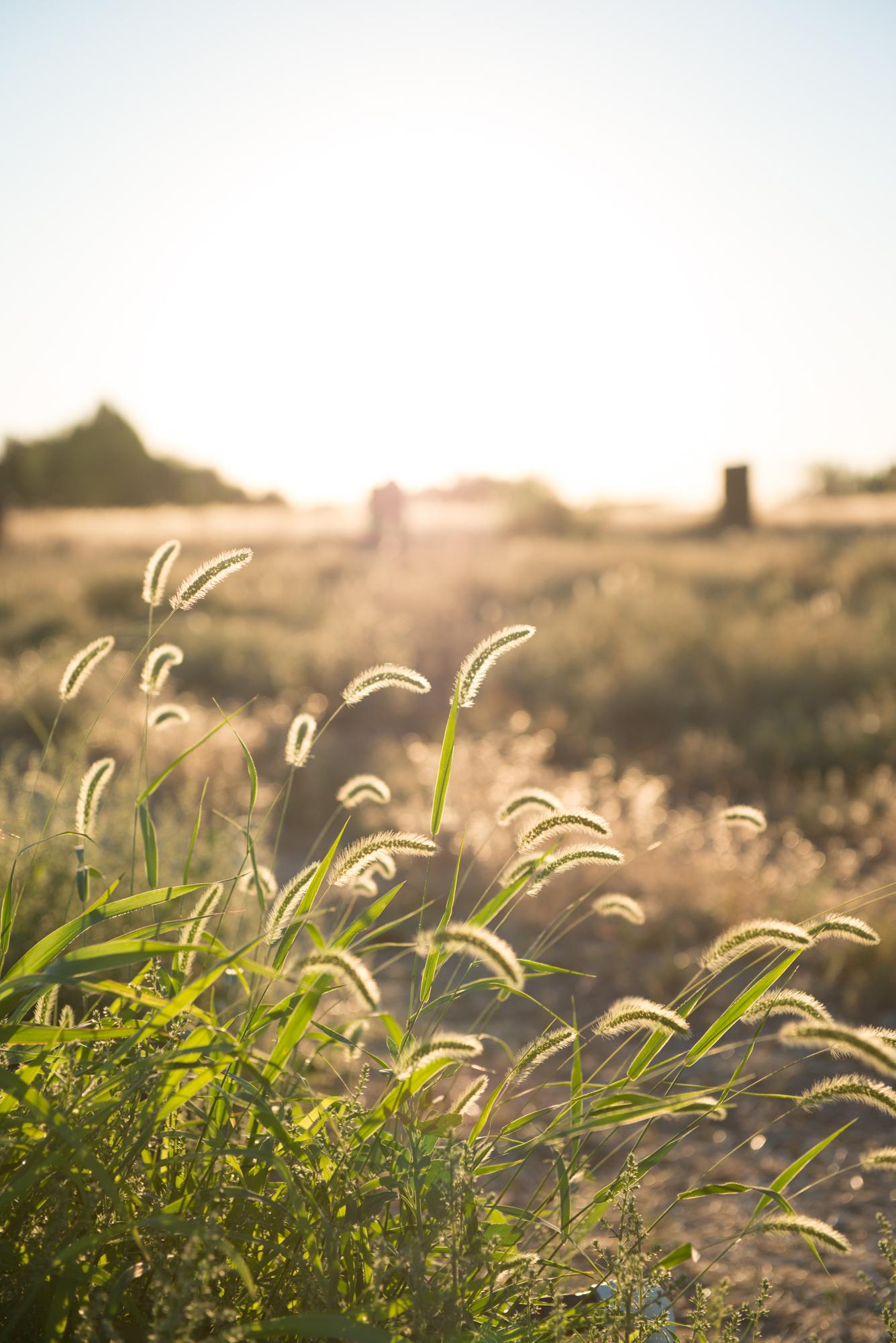 Sun on tall grass