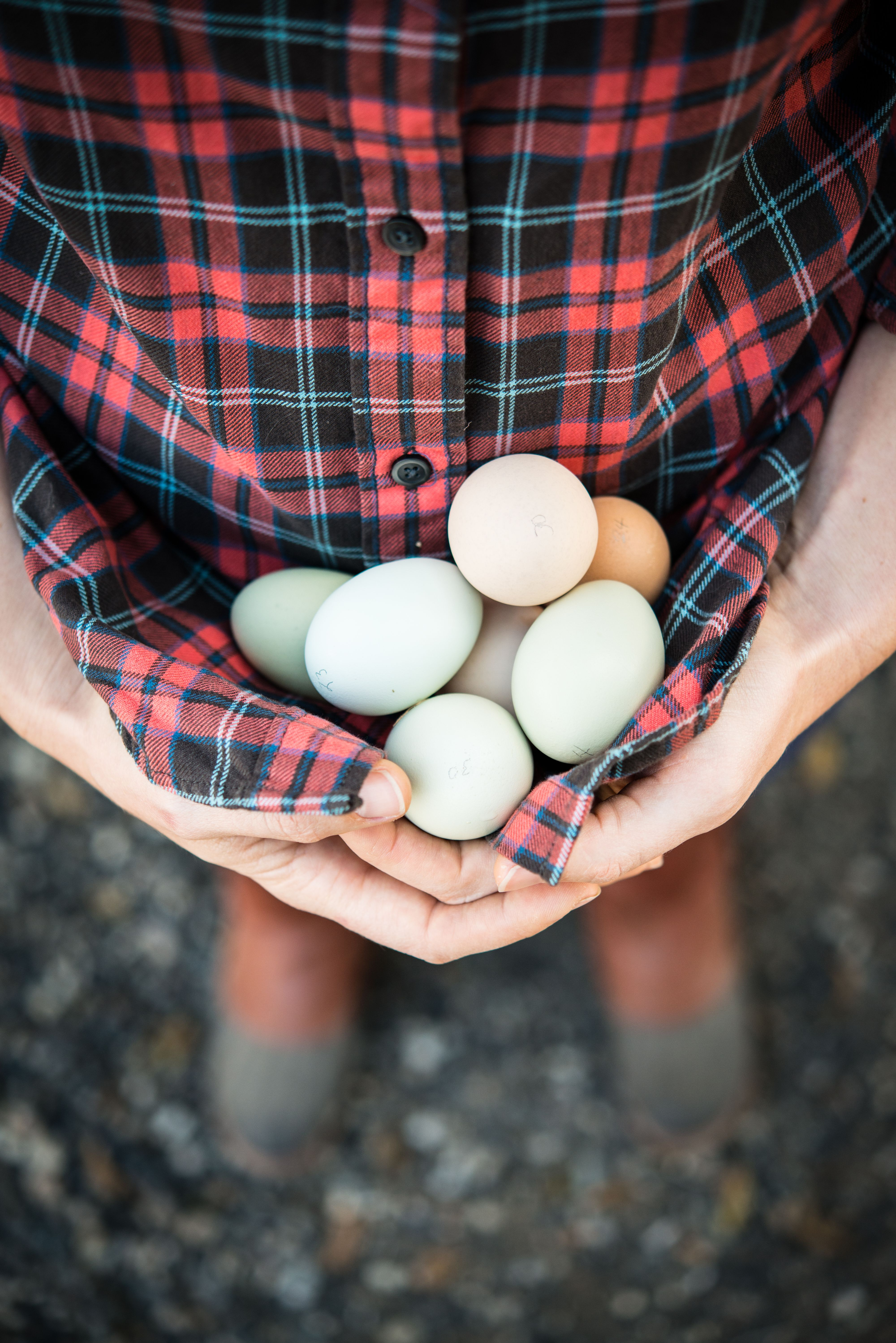 Holding daily eggs