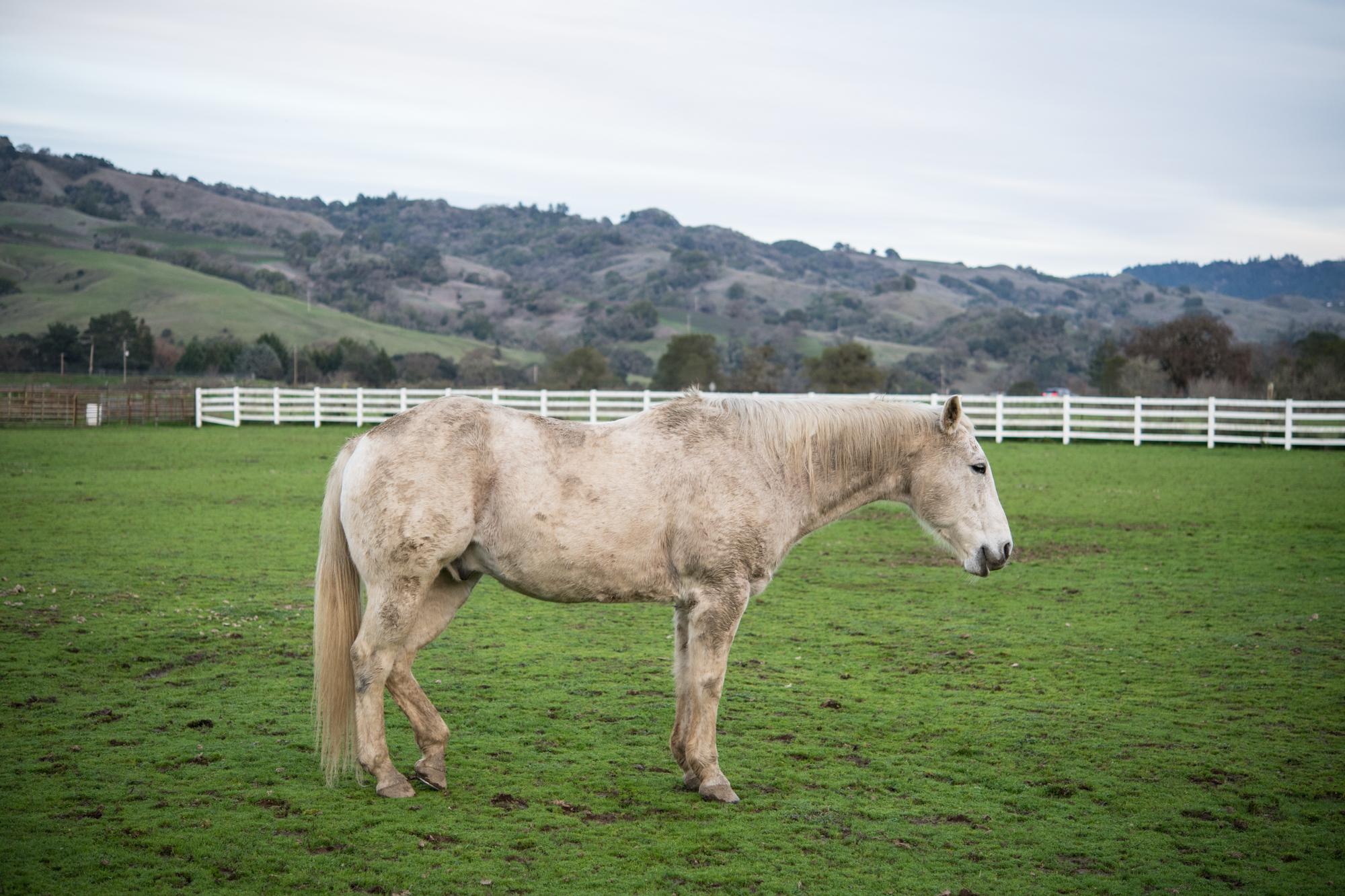 Dirty farm horse