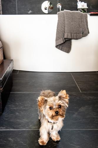 Dog on tile bathroom floor