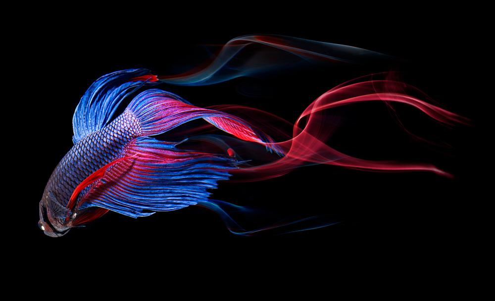fish2-125.jpg