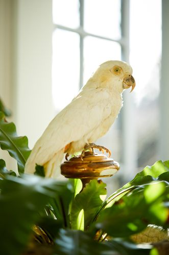 Parrot accessory, taxidermy, prop styling