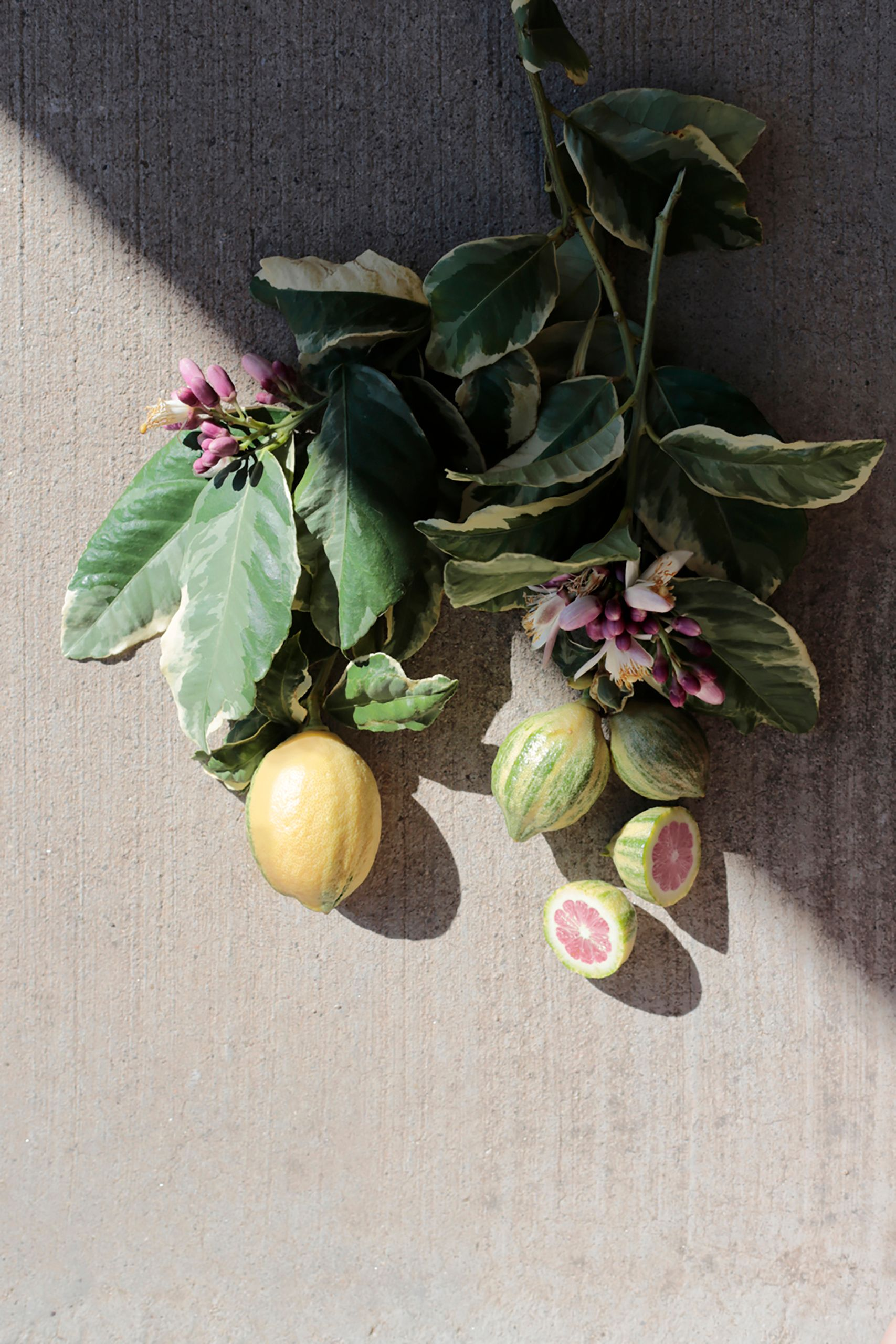 citrus and figs styled tabletop