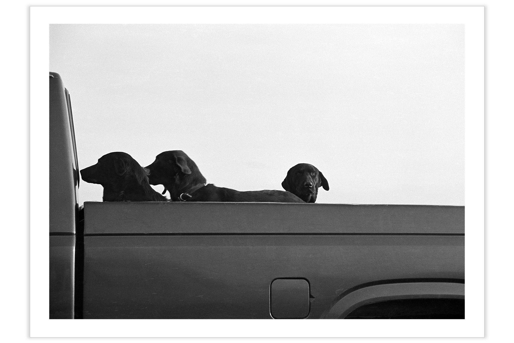 Three Dog Truck
