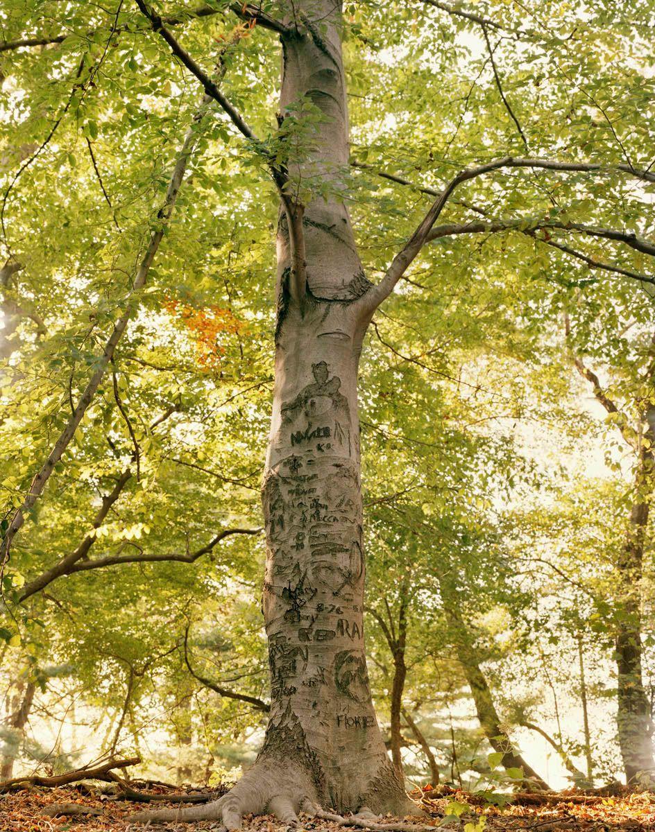 TREES_002.jpg