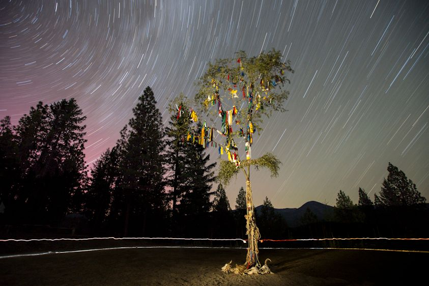 1sacred_tree1.jpg