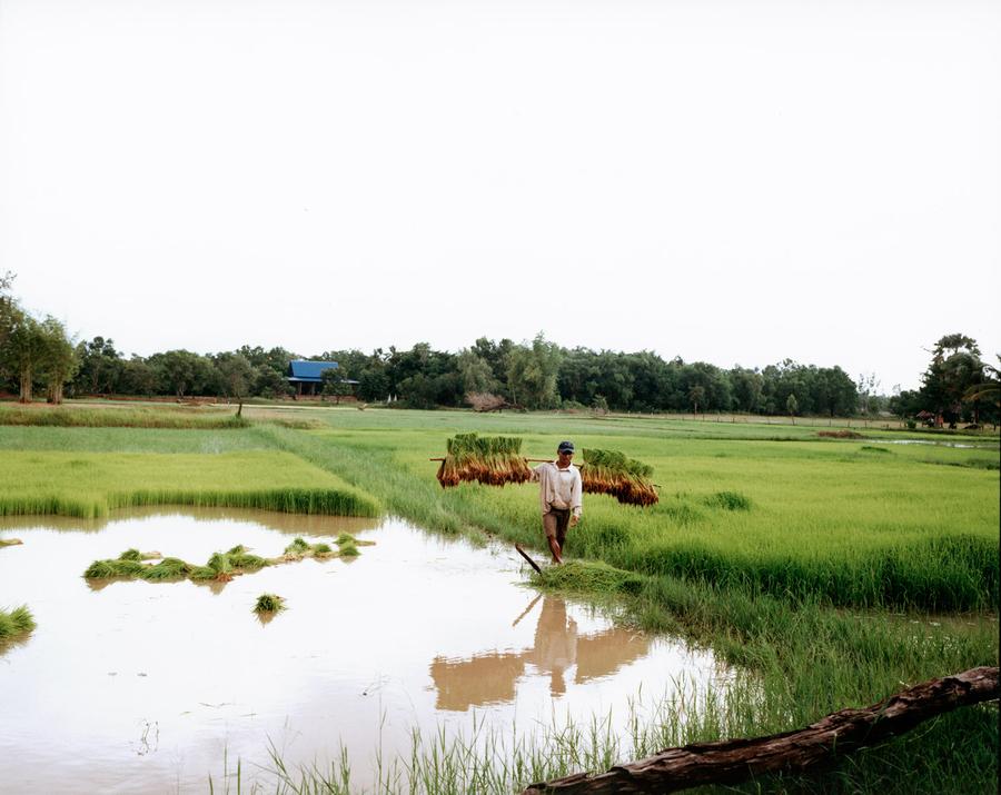 1man_in_rice_paddy.jpg