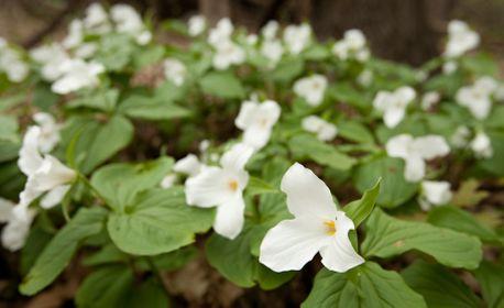 1r200705_springflowers05