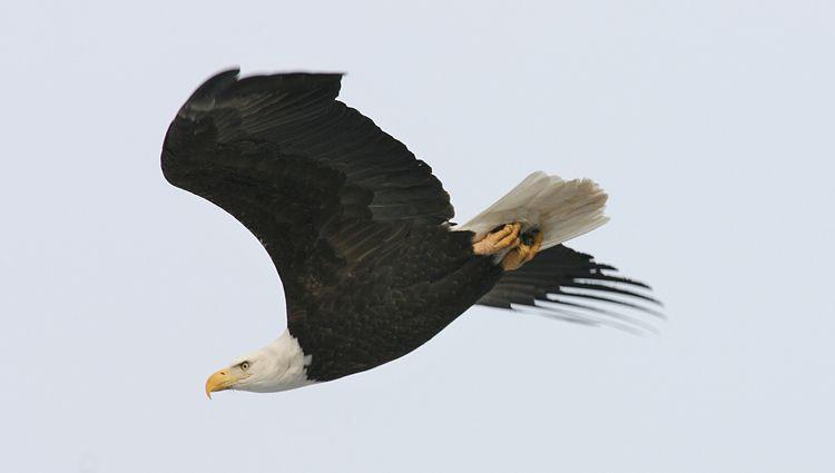 1r3_Eagle.jpg