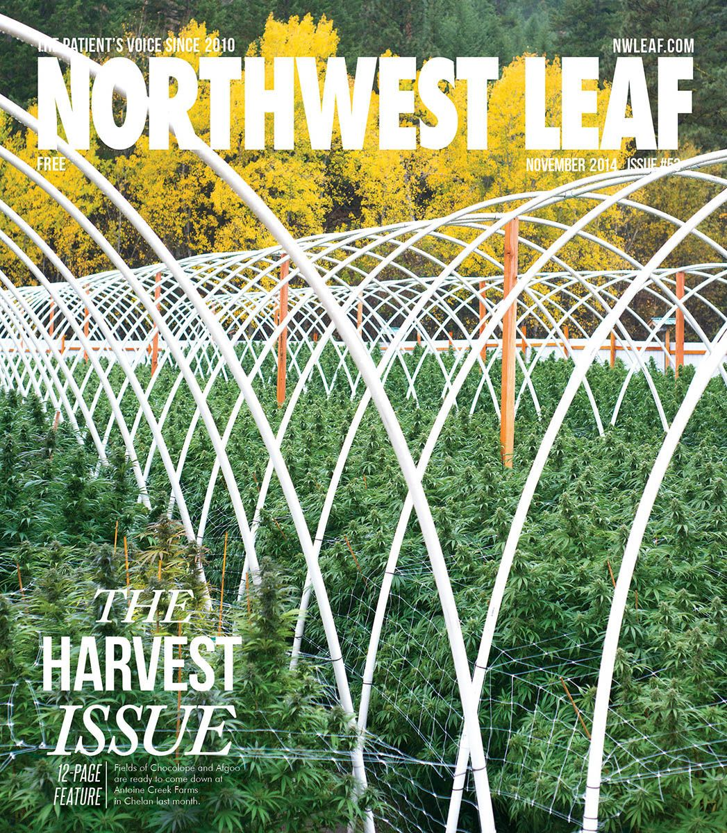 1nov2014_nwleaf_cover_seattleeditorialphotographer