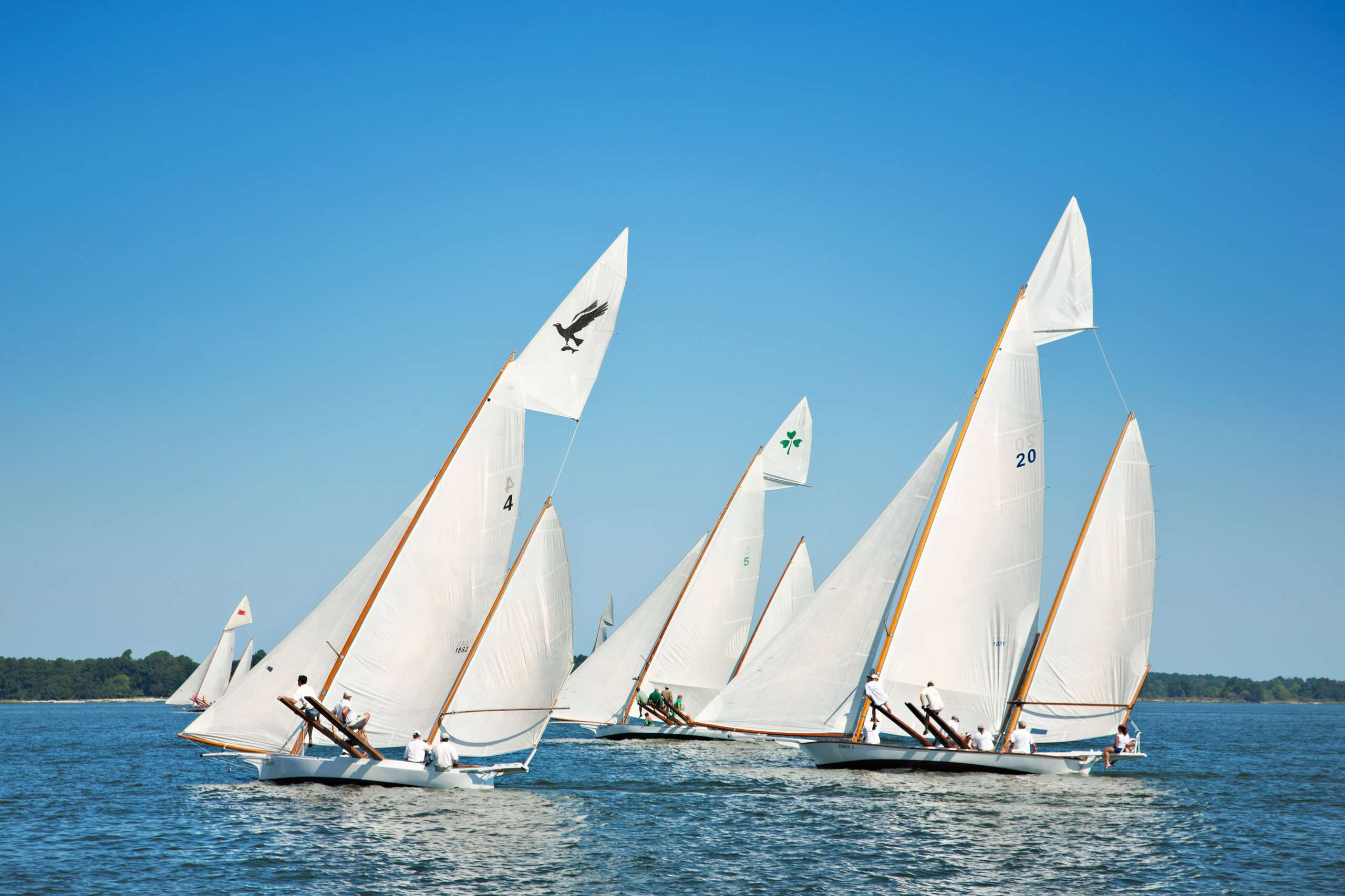 PORTFOLIO - Sailing - Log Canoes #25   PCG577