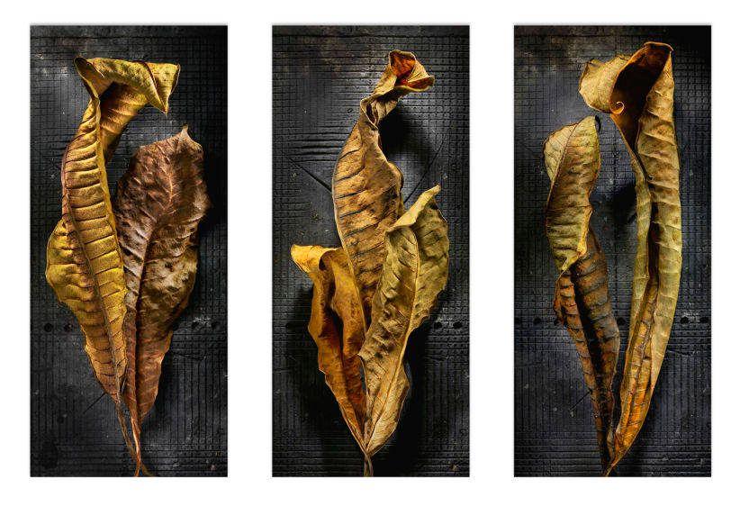 1r2___plumeria_leaves_