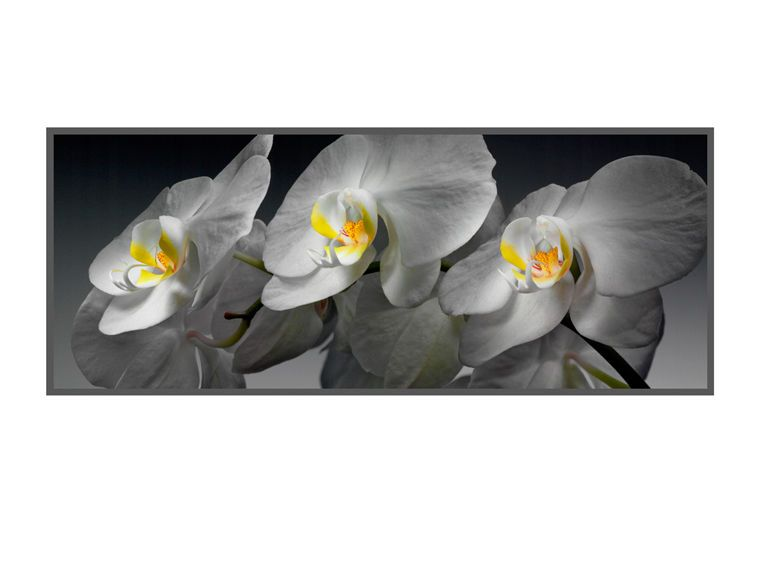 1r11__White_Orchids_1_