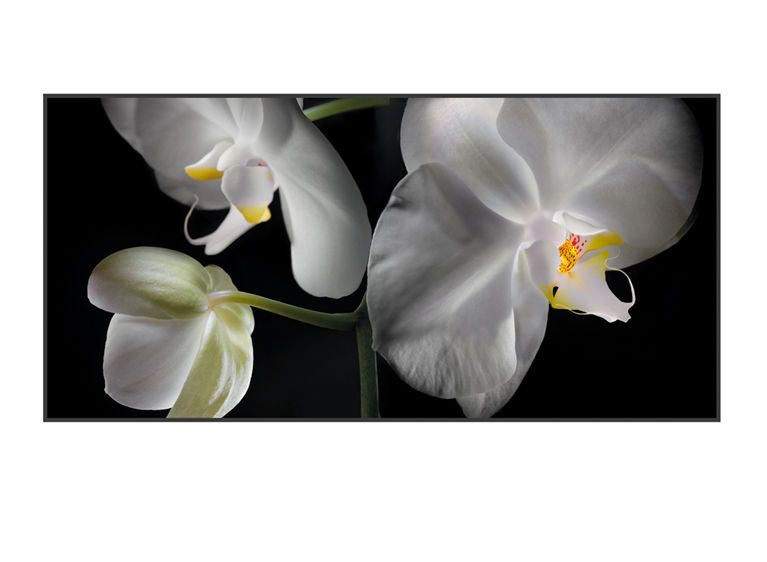 1r14__White_Orchids_7_