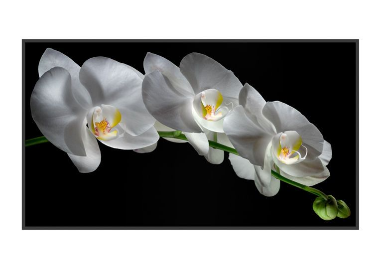 1r22__White_Orchids_5_