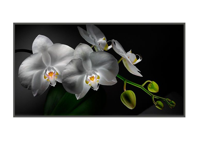 1r8__White_Orchids_4_